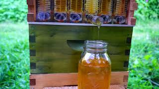 Honey Explosion! Flow Hive in 11 Weeks