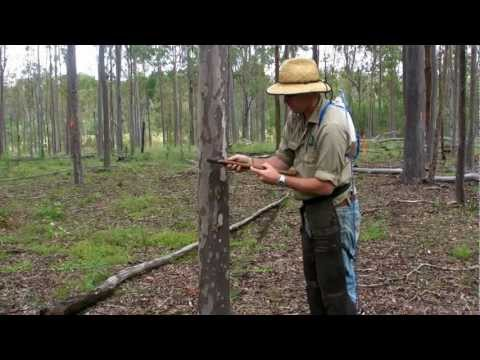 QLD Native Forest Management Silvicultural treatment