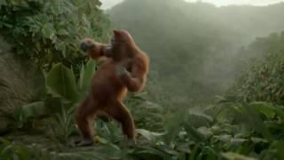 Танцует обезьяна