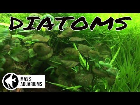 DIATOMS: What Happens Without FLOW In A Planted Aquarium?