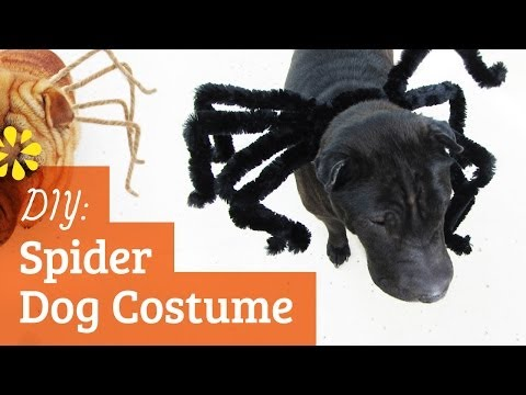 DIY Spider Dog Costume | Halloween Kin Collab | Sea Lemon