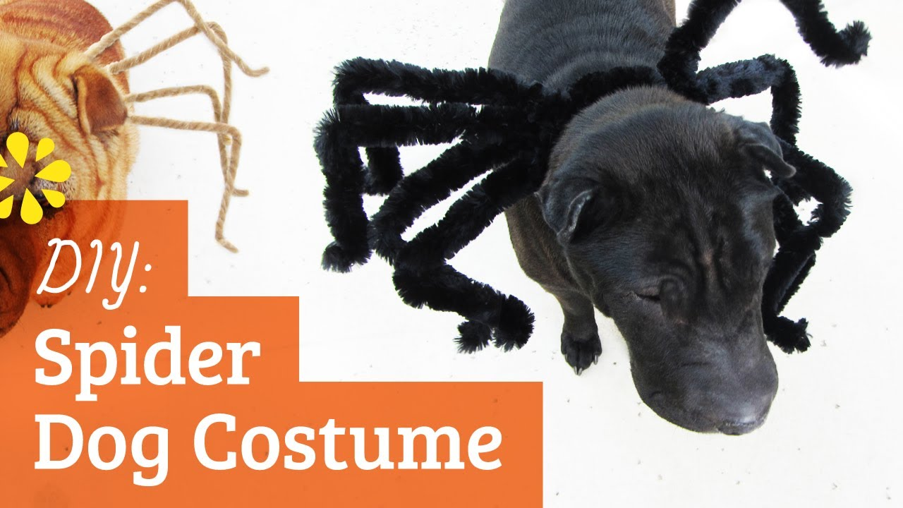 Diy spider dog costume halloween kin collab sea lemon youtube solutioingenieria Image collections