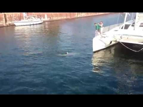 Nord-Ostsee-Kanal stundenlang gesperrtиз YouTube · Длительность: 37 с