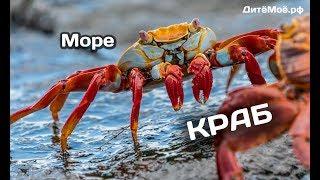 Краб. Энциклопедия для детей про животных. Море