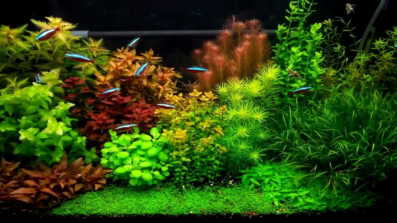 Dutch Aquarium Layout (1/2017) - YouTube