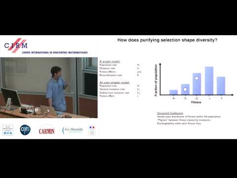 Michael Desai: Genetic diversity in the interference selection limit
