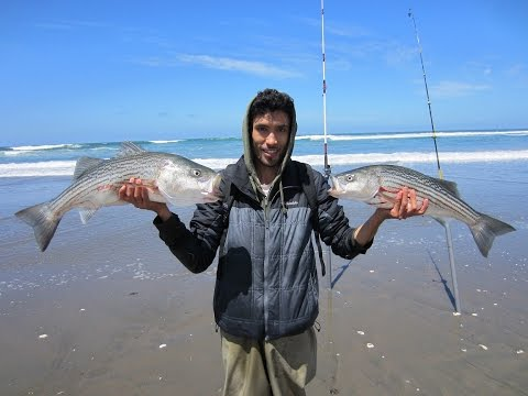 Surf Fishing for Striped Bass in San Francisco. Everyone Catches Their Limit!