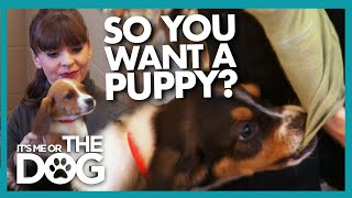 A Beginners Guide to Puppy Training (And Picking the Right Dog for You!)   It's Me or the Dog