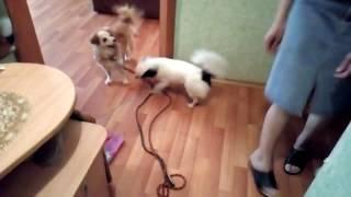 Смешные животные/ Гулять пойдем?!/ Выпуск 1/ Собаки