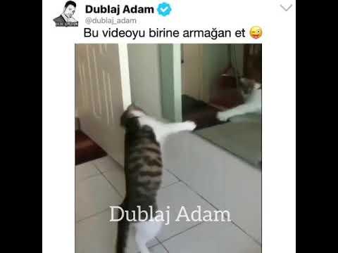 Heyecanı yok kedi dansı