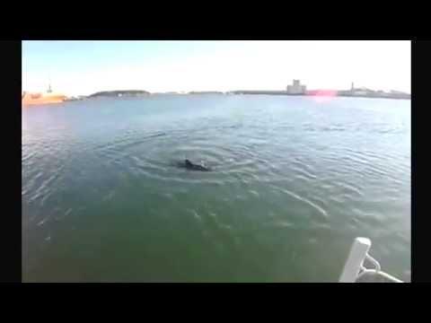 Zijn onderwater drones de ontdekkingsreizigers van de