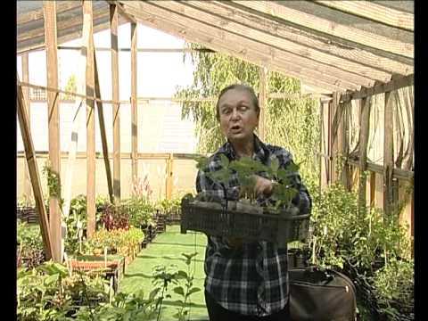Основы питания растений (Природное земледелие). Осенние работы в .