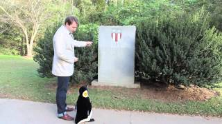 Tyler and Penguin