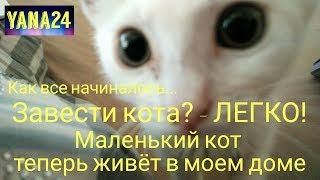 Влог Elif LIFE я решилась завести кота новый кот  любящий кот простой кот