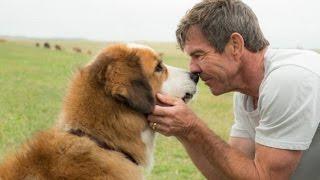 Собачья жизнь (2017)— русский трейлер