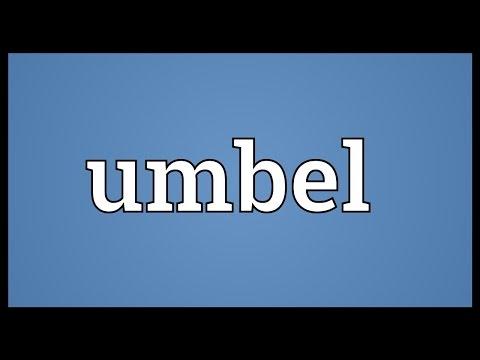 Umbel Meaning