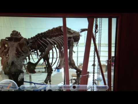 How did the dinosaur, Sue, be built up at The Field Museum?!