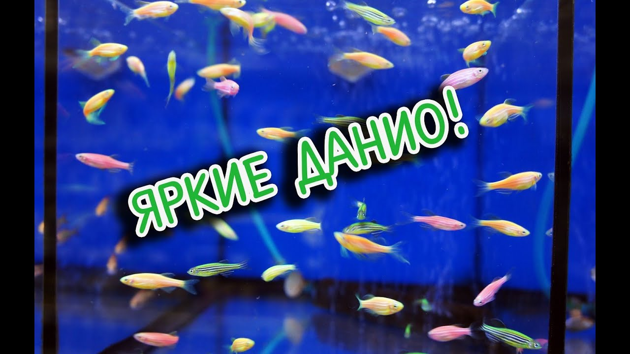 Мальки рыбок ГУППИ, как я поднимаю Малька - YouTube