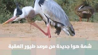 شمة هوا جديدة من مرصد طيور العقبة