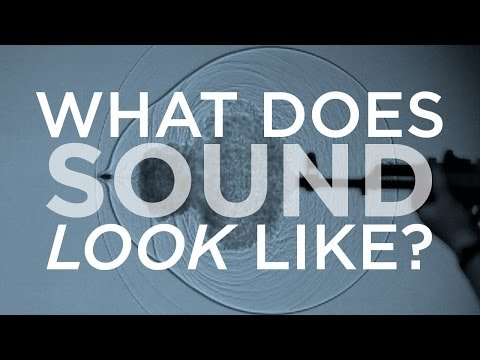 What Does Sound Look Like? | SKUNK BEAR