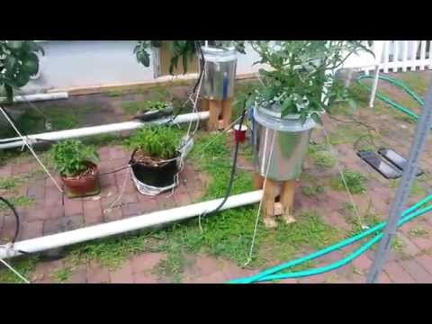 Aero-Buckets Garden update - Day 56