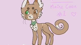 Mooncake- StarBucks Maine Coon Cat adoptable ( FOR D T A ) READ THE HECKIN DESCRIPTION-!