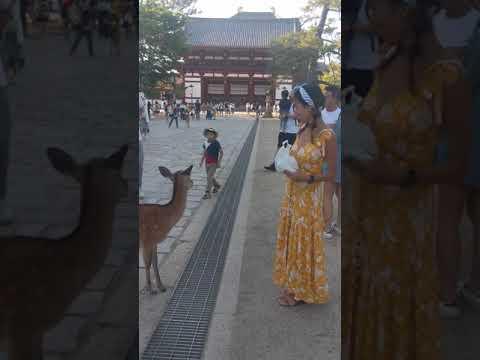Bowing with Nara Deer
