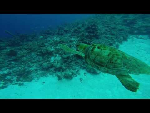 Bay of Pigs Scuba Dive