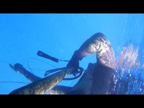 Ersoy doğru akdenizde minekop avı derin su