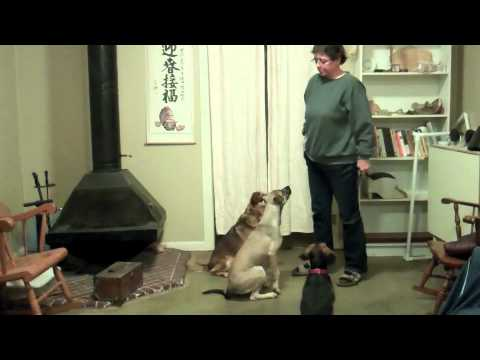 Dog Training Bloopers and Blog