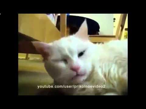 Кошки приколы Коты и кошки зевают- озвучка