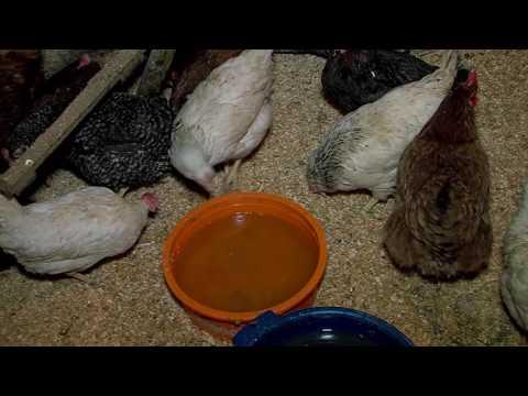 Осторожно: птичий грипп!