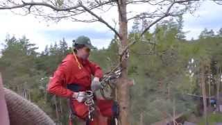 Как пилить дерево сверху(, 2013-10-13T11:11:41.000Z)