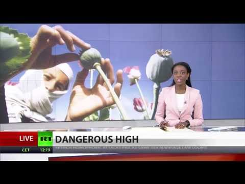 Afghanistan expects record opium harvest despite US crop kill rhetoric