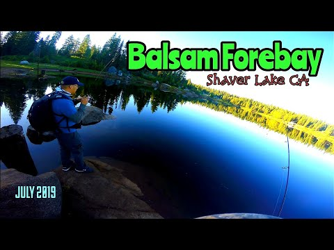 Balsam Forebay Tiny Creek Fishing Around Shaver Lake Ca July 2019 W Gary Phia Youtube