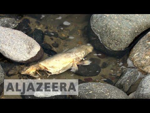 Yellowstone River partially opens amid fish-killing parasite