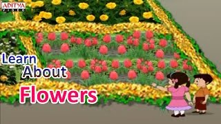Learn About Flowers for Kids - Pre And Play School Nursery Rhymes
