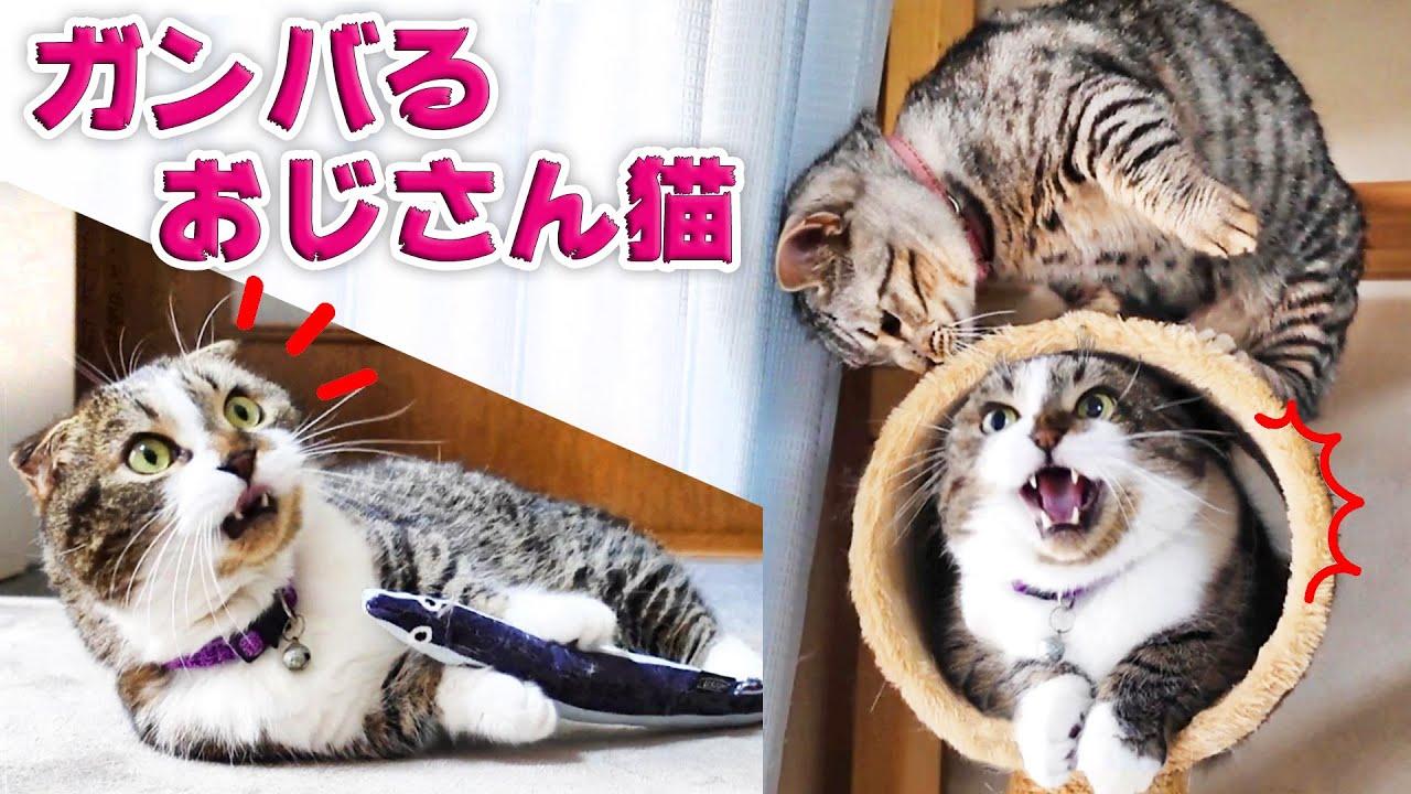 オジサン猫がガンバる縄張り争いとひとり遊び!