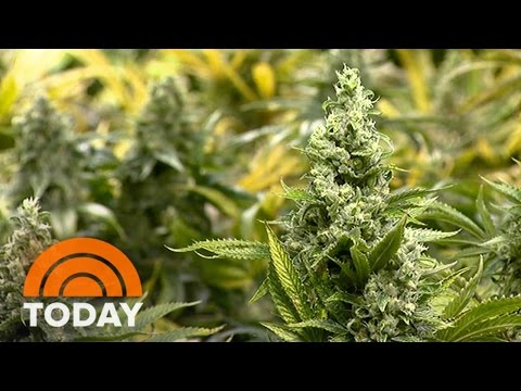 a proposal for legalization of marijuana to save tax payers billions used in fighting its use Other states may soon also have laws and policies to legally control the market for marijuana, so consumers can buy it for their own use from a safe legal source medical marijuana legalization marijuana has been used for centuries for medicinal purposes.