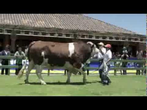 Agrovet Market y Grupo Grandes en 63 Feria Holstein Quito - 20-22 Setiembre 2013