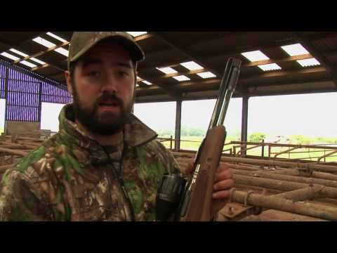 Air Arms TV   Airgun Hunting  Feral Pigeon Shooting
