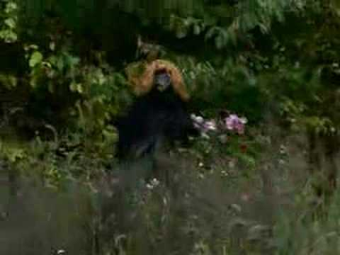 REAL Sasquatch Caught On Tape 2015 - YouTube
