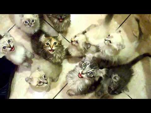 Many hungry kittens / Много голодных котят
