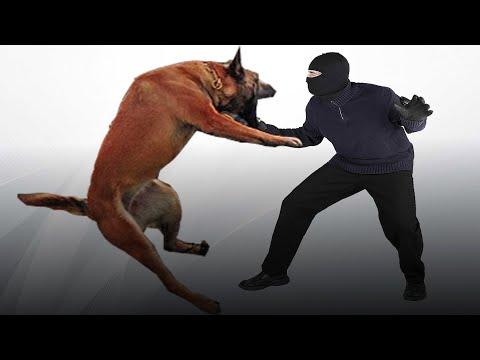 Top 5 Deadliest Guard Dogs