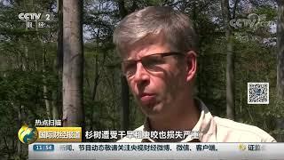 [国际财经报道]热点扫描 德国:高温缺水 部分地区林木枯损  CCTV财经