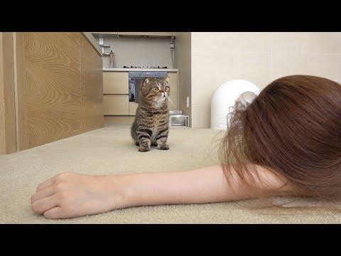 고양이 앞에서 진짜 죽은 척 하면 생기는 일