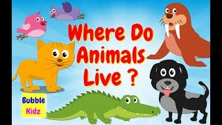 Animal And Their Homes | Learn About Animal Homes And Habitat For Children |Bubble Kidz
