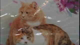рус Выставка кошек