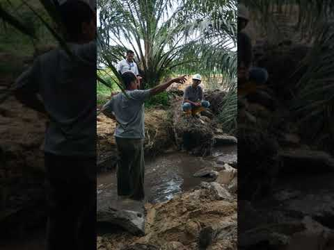 Video Adu Mulut Antara Masyarakat dan Pihak PT.BSS Terkait Pembobolan Sirkulasi Kolam Limbah