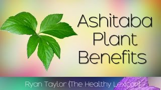 Ashitaba Plant: Health Benefits (Tomorrow Leaf)